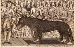 Жеводанский зверь: факты и легенды