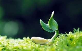 Как правильно пишется слово растите или ростите?