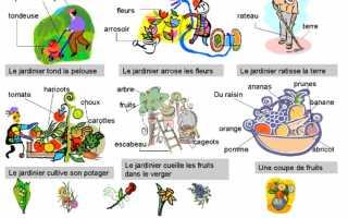 Фрукты. названия на французском