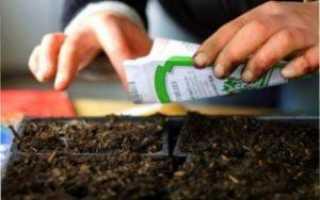 Помідори: як правильно збирати та зберігати урожай?