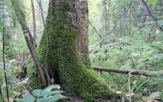 Как правильно «осень в лесе» или «осень в лесу»?