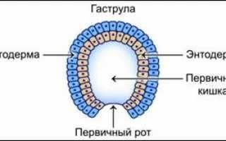 Каким бывает зародыш:(определения приводятся в именительном падеже)