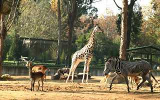 Как правильно пишется, ударение в слове «зоопарк»