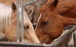 «лошадями» или «лошадьми» — как правильно писать и говорить?