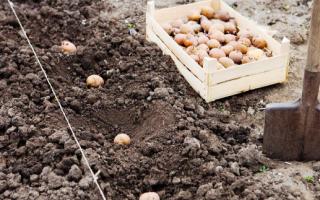 Как не путать понятие «дача» и «садово-огородный участок»?