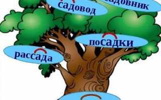 Правописание корней