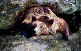 Медведь в украинский